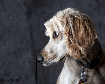 park city photography, pet photography, dog, pet portraits, park city utah, dog photography